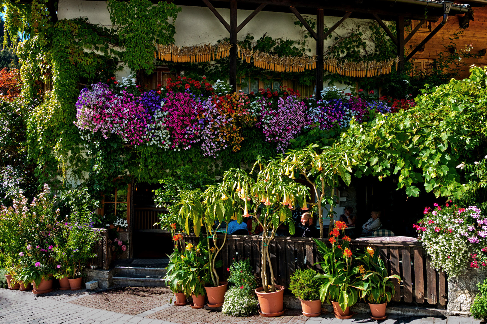 Blütentraum im Passeiertal - I Make a Break