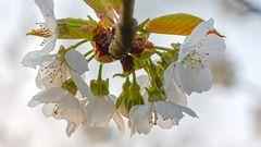 Blütentraum in der STREUOBSTWIESE