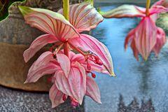 Blütentraum in Rosarot