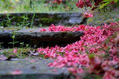 Blütentreppe