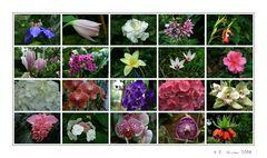 -Blütenvielfalt ...