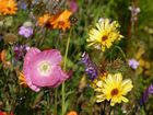 Blütenvielfalt des Sommers