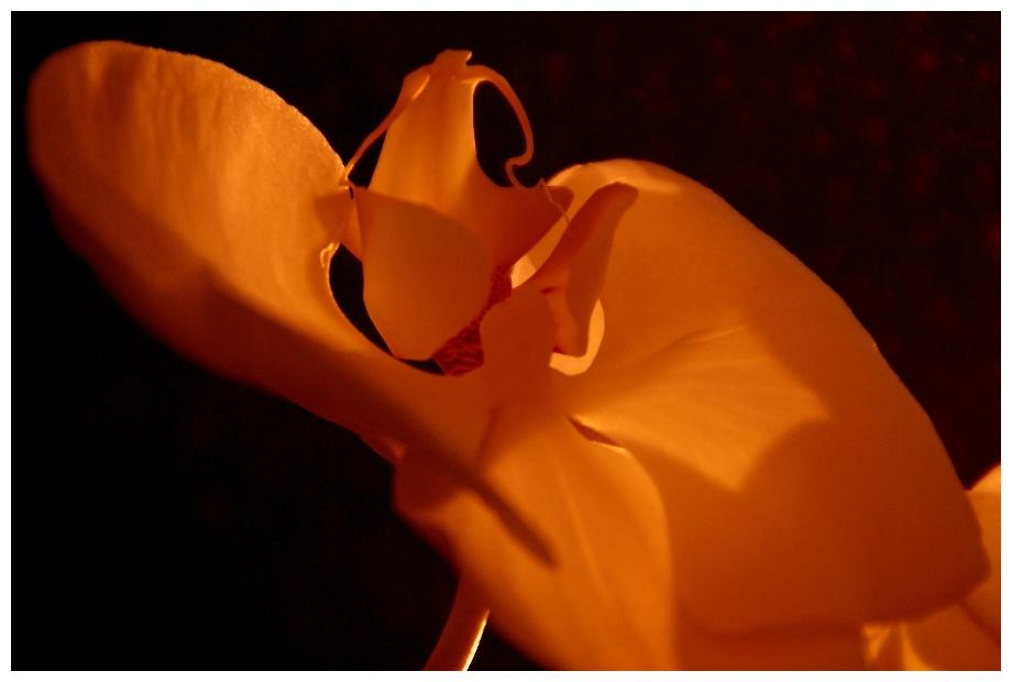 Blütenwärme