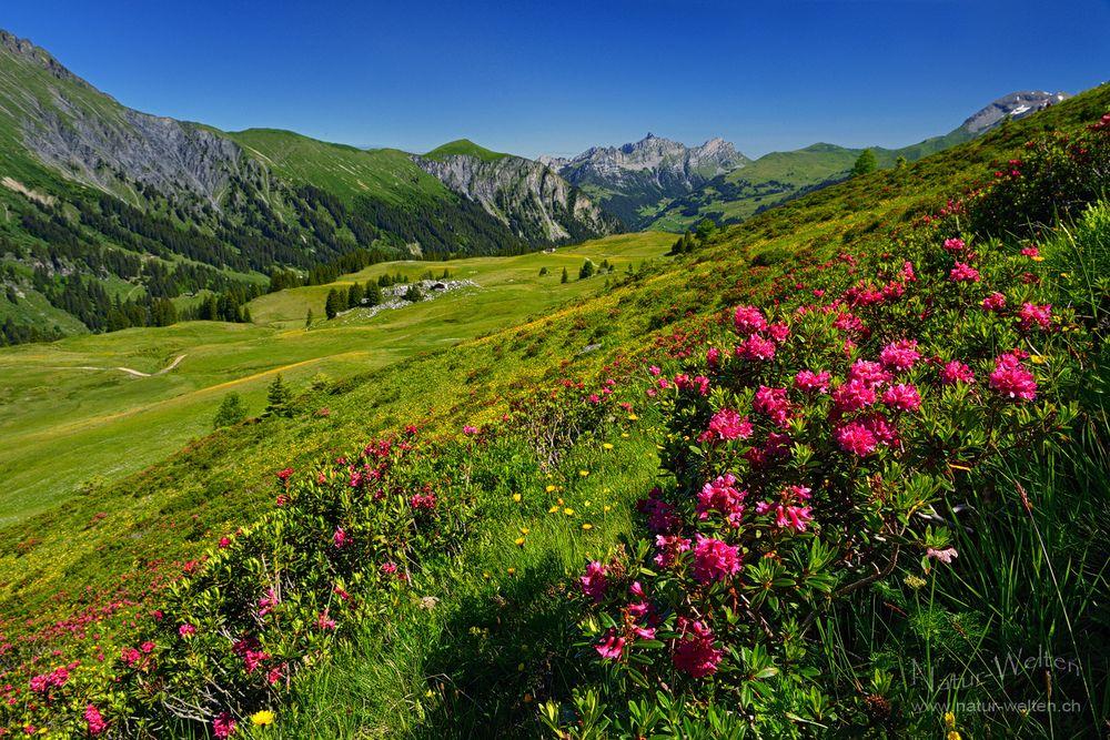 Blütenwanderung am Betelberg