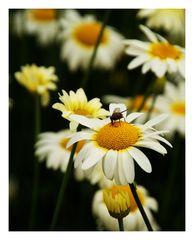 Blütenweich