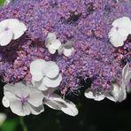 Blütenweiss....