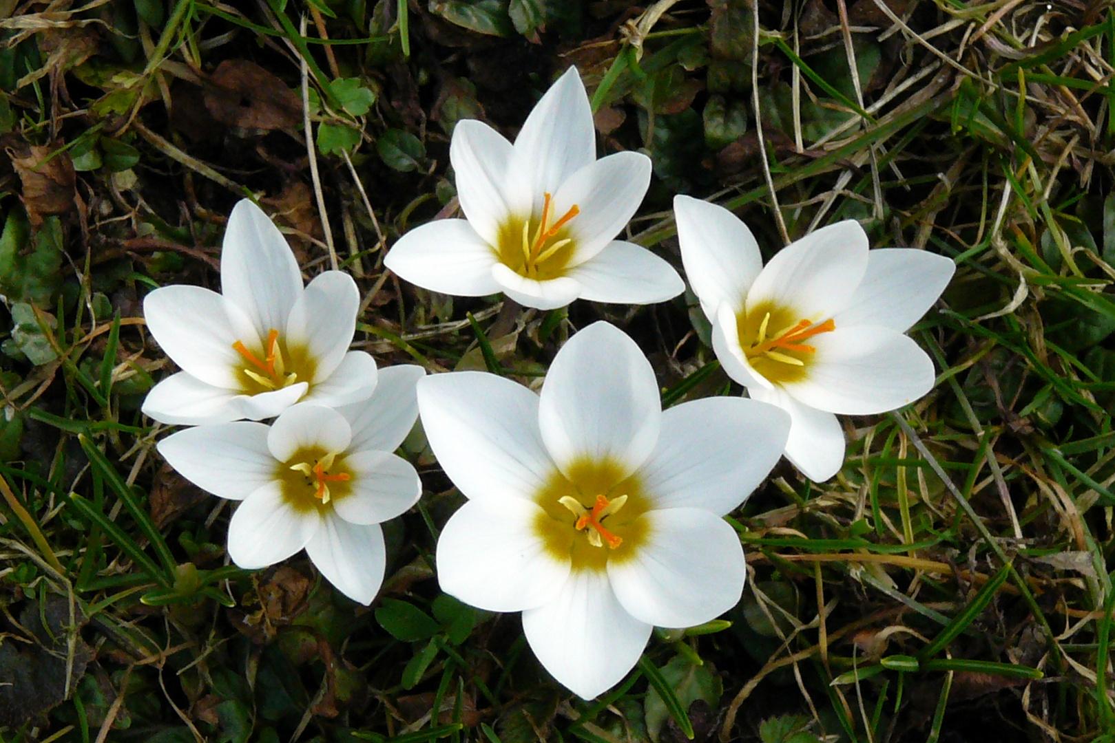 Blütenweiß statt Schneeweis