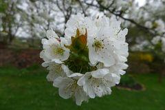 Blütenwesen