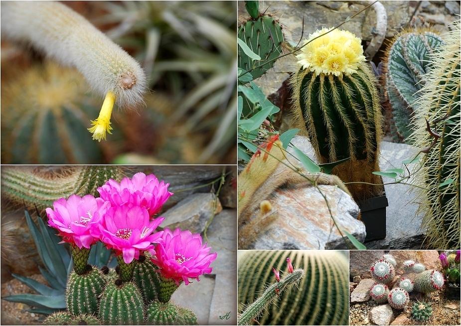 Blütenwettstreit