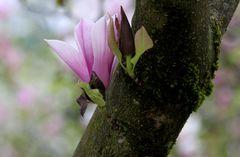Blütenwunder