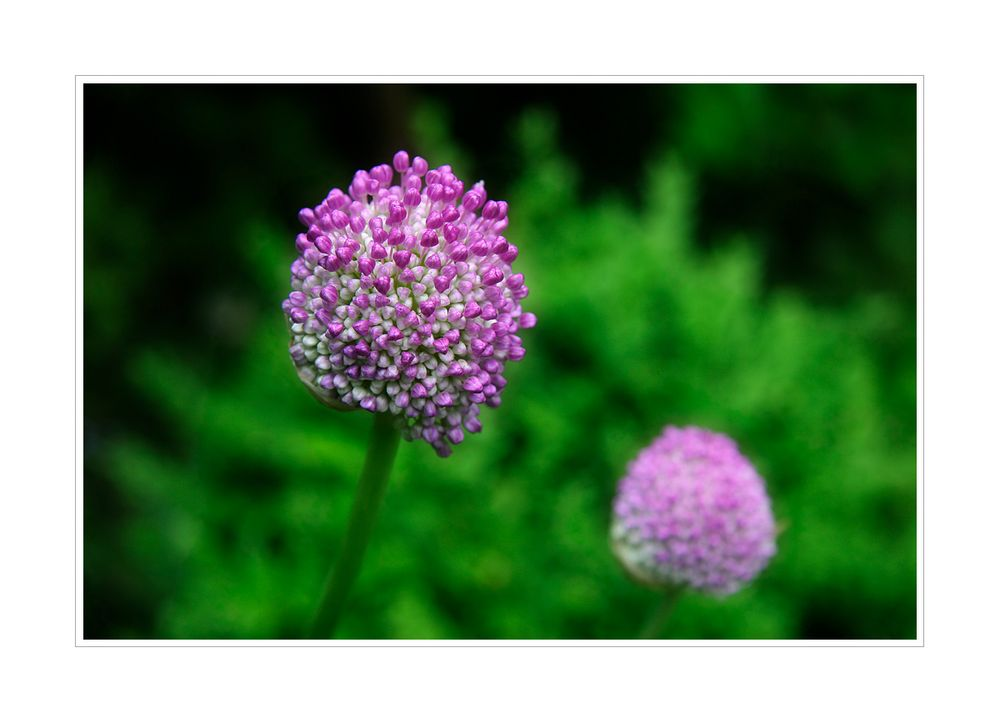 < Blütenwunder >