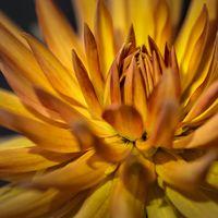 Blütenwunder by Rhein Pfalz Naturfoto