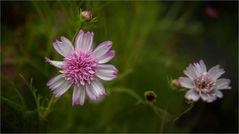Blütenzauber 08