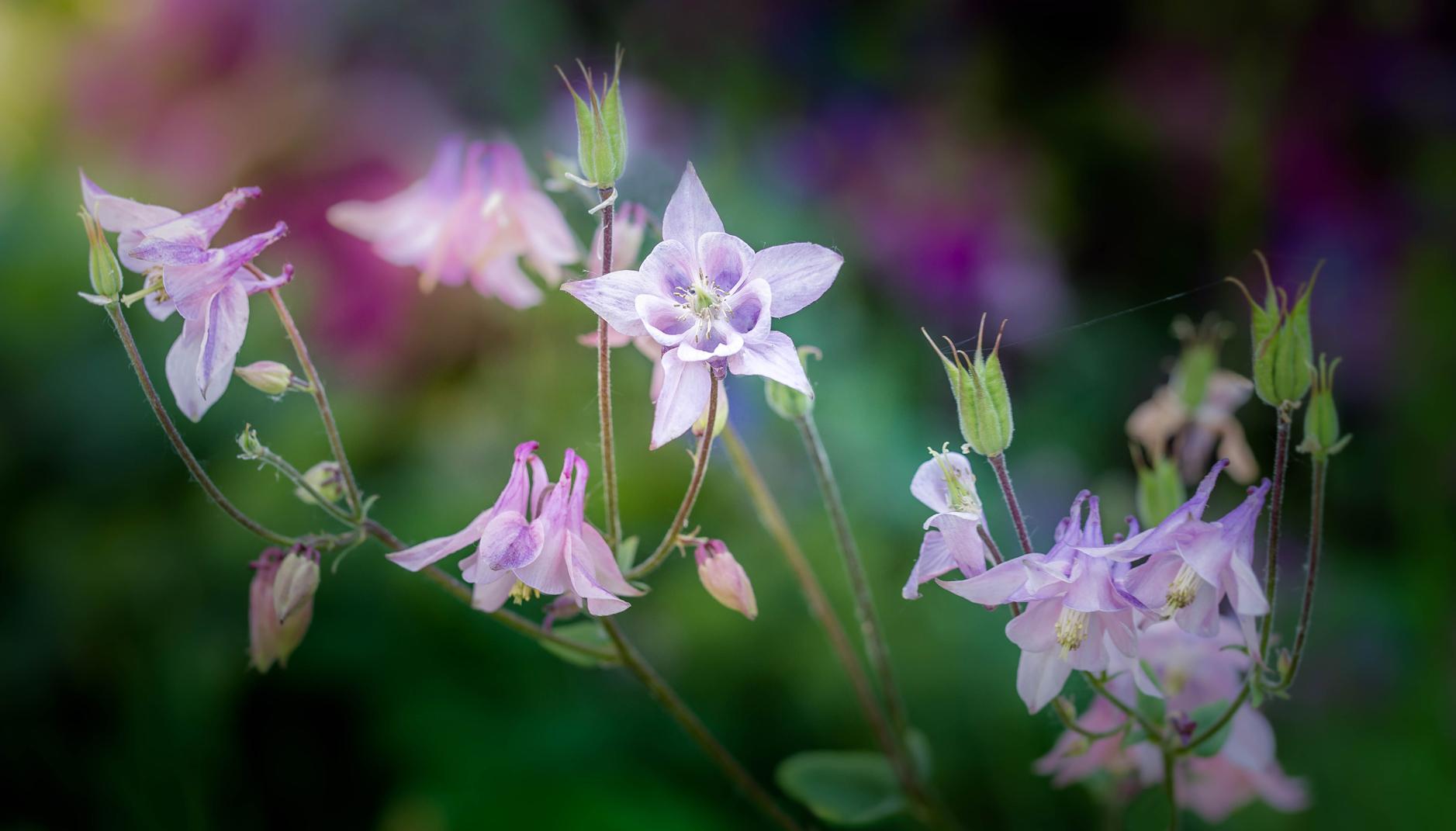 Blütenzauber 10
