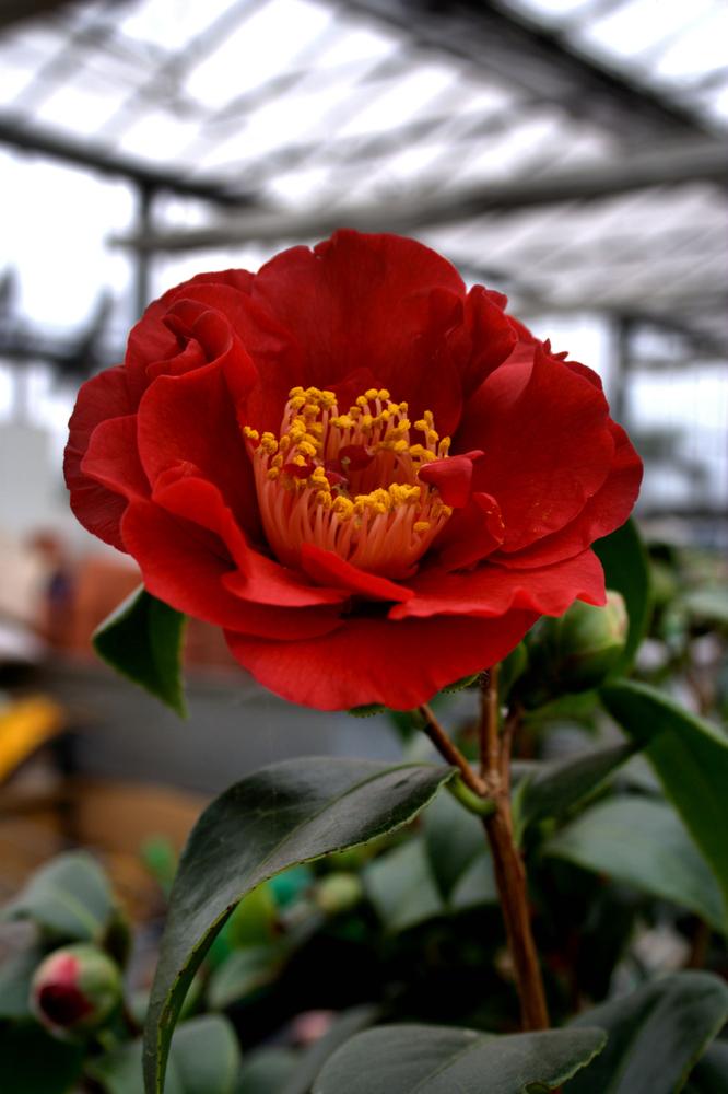 Blütenzauber 18