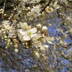 Blütenzauber 2