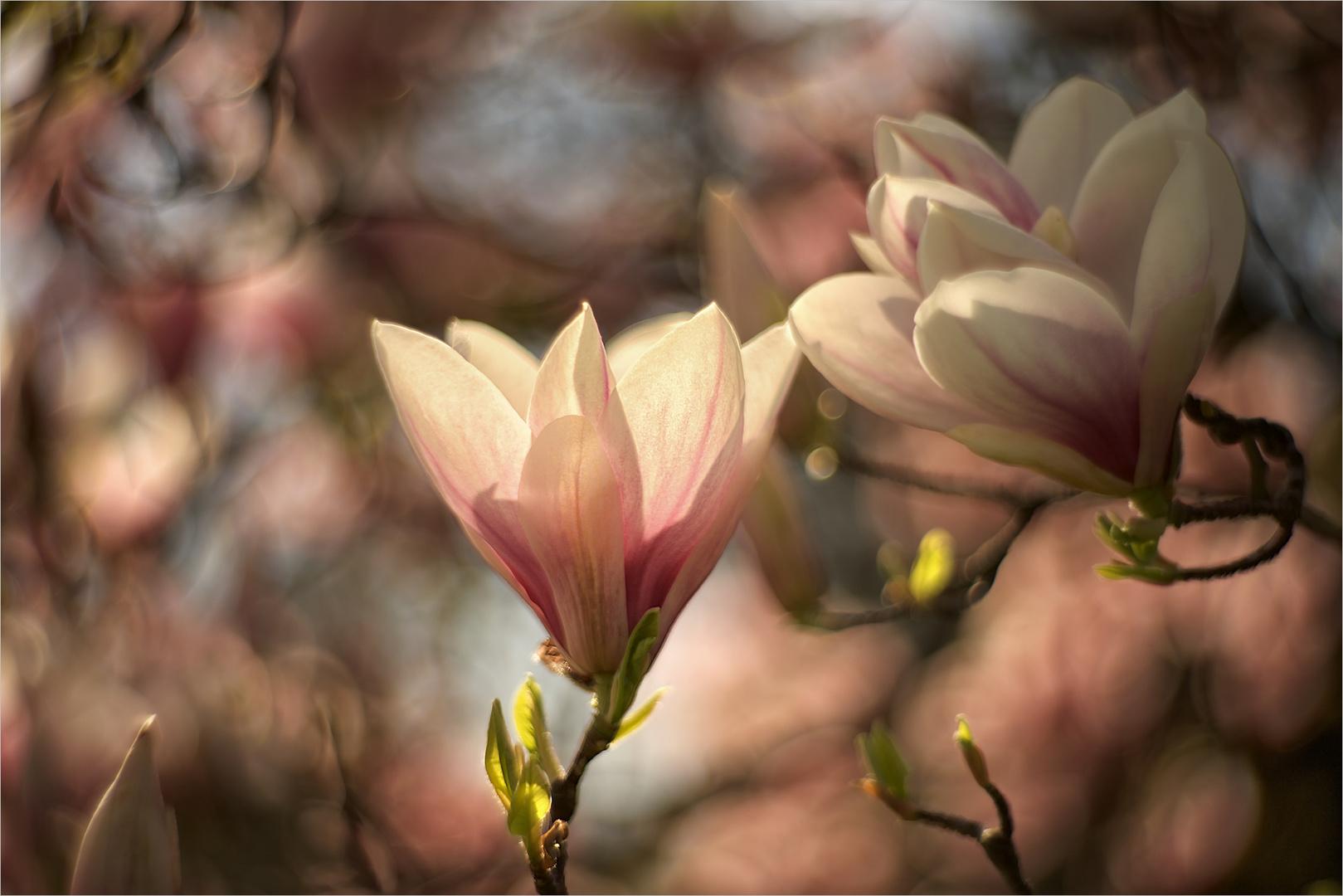 Blütenzauber (4)