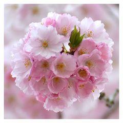 * Blütenzauber *