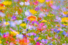 *** Blütenzauber ***