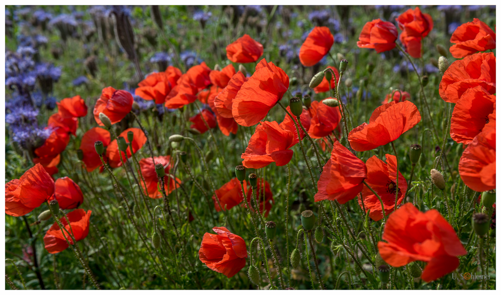 * Blütenzauber