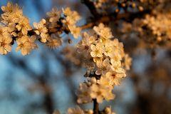 ... Blütenzauber ...