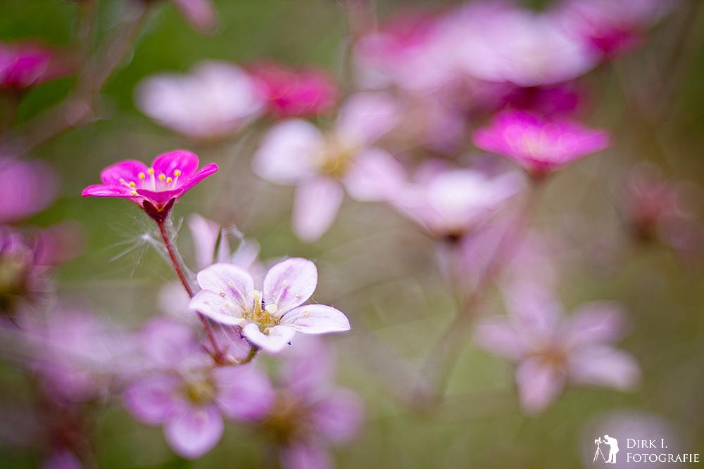 ***Blütenzauber***