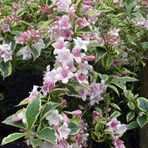 Blütenzauber im Mai