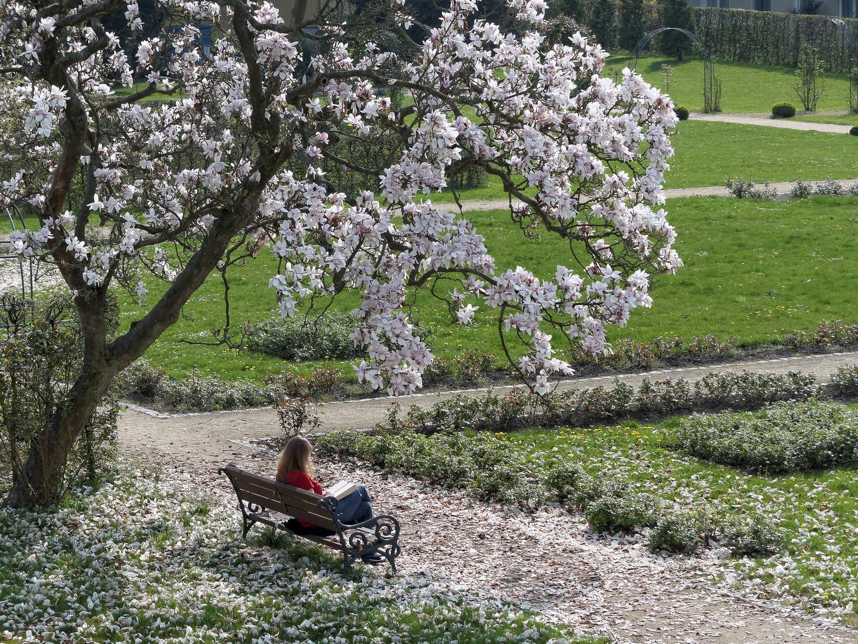 Blütenzauber im Park