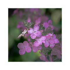 Blütenzauber - Lila