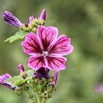 Blütenzauber Nr. 3