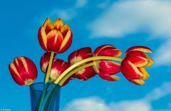 Blütenzauber - Tulpen (1)
