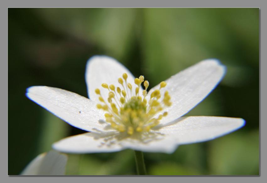 Blütenzauber2