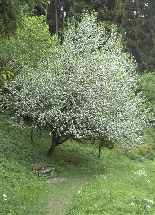 Blütenzeit im Klumpertal