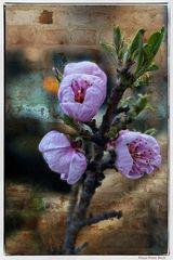 Blütenzweig im Frühjahr