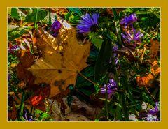 BlüteundHerbstblatt-Vergänglichkeit