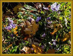BlüteundHerbstblatt2-Vergänglichkeit