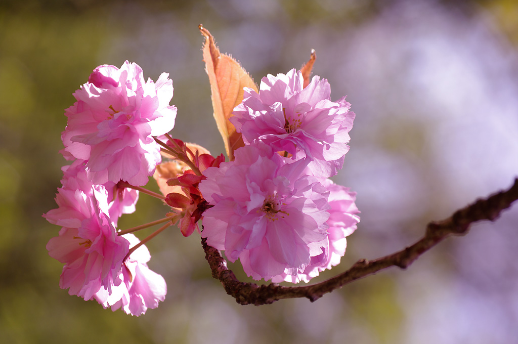 Blütezeit im Eppendorfer Moor