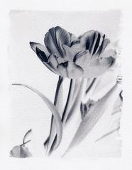 Blume #2