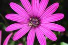Blume,