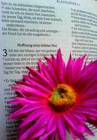 Blume :)