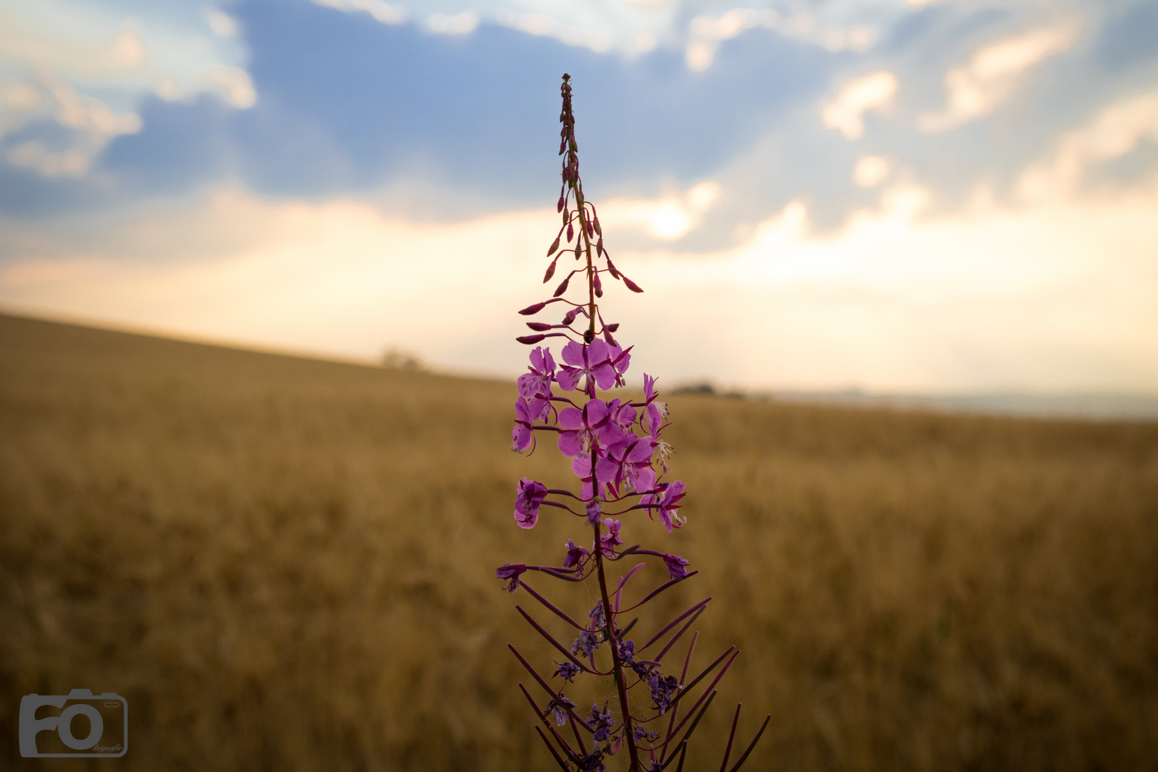 Blume am Feldweg