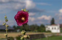 Blume am Strassenrand