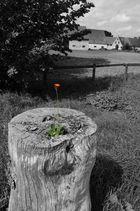 Blume auf abgestorbenem Stamm