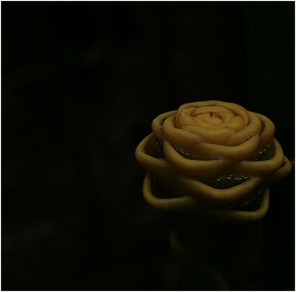 Blume aus dem Palmengarten