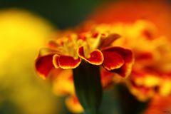 Blume bunt