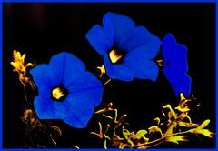 Blume der Nacht - 1