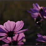 Blume des Herzens...