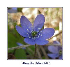 Blume des kommenden Jahres 2013