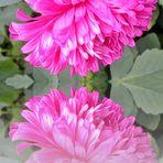 Blume gespiegelt