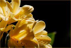 Blume im Licht